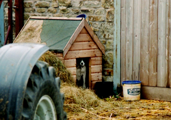 dog house, Swaledale, North Yorkshire