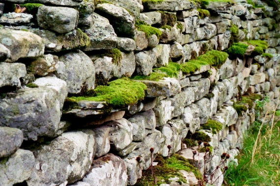 stone wall, Swaledale, North Yorkshire