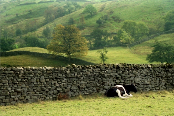 Swaledale, Yorkshire Dales