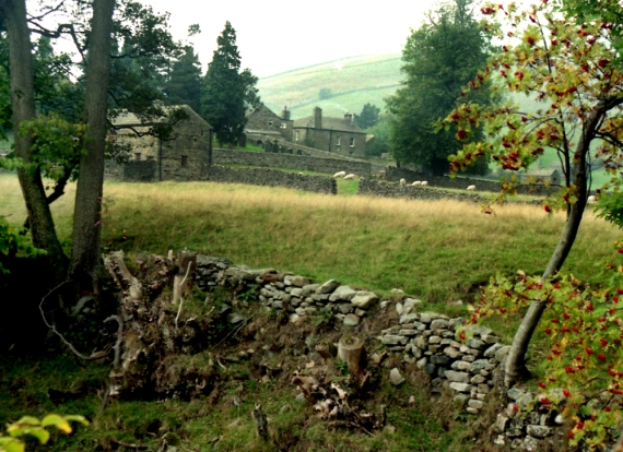 wall with farm, Swaledale, North Yorkshire