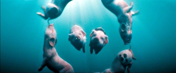 Nanny McPhee: The piglet synchronized swim