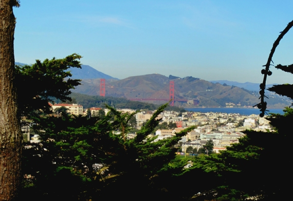 Golden Gate Bridge from Buena Vista Park
